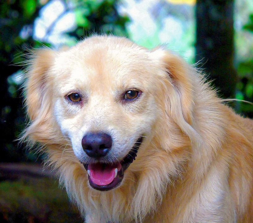 dogs-958215_960_720