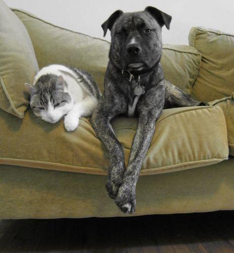 Trillium_Poncho_cat_dog