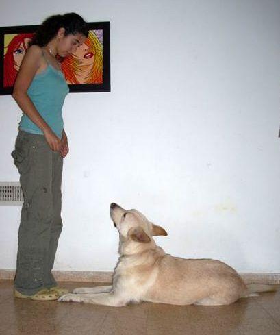 Dog_training