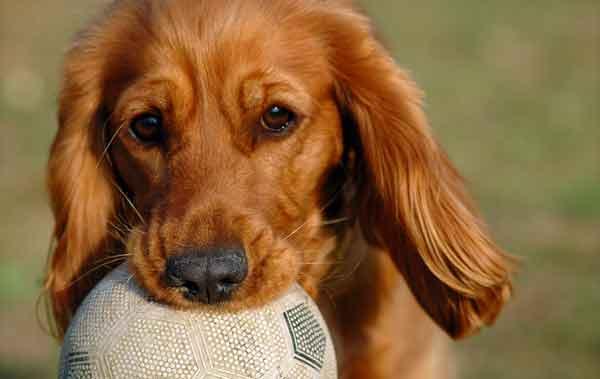 hund-med-boll-2